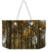 Sunny Larch Grove Weekender Tote Bag