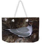 Swallow-tailed Gull And Chick Calling Weekender Tote Bag by Tui De Roy