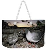 Swallow-tailed Gull And Chick In Pebble Weekender Tote Bag by Tui De Roy