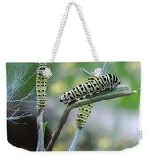 Swallowtail Caterpillars On Dillweed Weekender Tote Bag