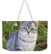 Sweet Little Tabby Kitten Weekender Tote Bag