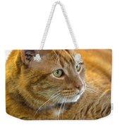 Tabby Cat Portrait Weekender Tote Bag