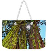 Tahoe Trees - Lake Tahoe By Diana Sainz Weekender Tote Bag
