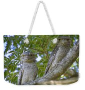 Tawny Frogmouths Weekender Tote Bag