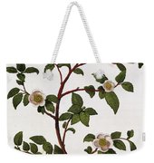 Tea Branch Of Camellia Sinensis Weekender Tote Bag by Anonymous