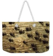 Termites On Wood With One Carrying Weekender Tote Bag by Konrad Wothe