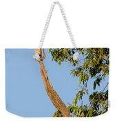 The American Kestrel Weekender Tote Bag