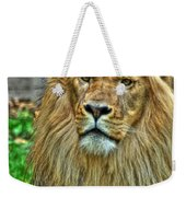 The Attentive Lazy Boy At The Buffalo Zoo Weekender Tote Bag