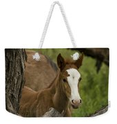 The Curious Colt  Weekender Tote Bag