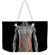The External Oblique Muscles Weekender Tote Bag