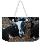 The Goat With The Gorgeous Eyes Weekender Tote Bag