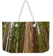 The Survivor - Massive Redwoods Sequoia Sempervirens In Redwoods National Park Named Stout Tree. Weekender Tote Bag