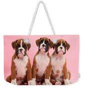 Three Boxer Puppies Weekender Tote Bag