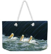 Three Pelicans Hanging Out  Weekender Tote Bag