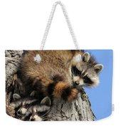Three Young Raccoons Weekender Tote Bag