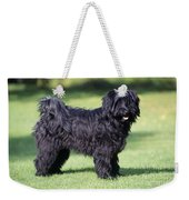 Tibetan Terrier Dog Standing Weekender Tote Bag