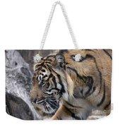 Sumatran Tiger-5418 Weekender Tote Bag