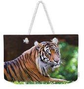 Tiger In The Sun Painting Weekender Tote Bag
