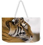 Tiger Sleeping Weekender Tote Bag