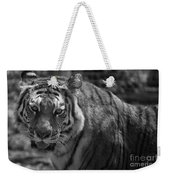 Tiger With A Fixed Stare Weekender Tote Bag