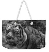 Tiger With A Hard Stare Weekender Tote Bag