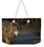 Timber Wolf Pictures 1103 Weekender Tote Bag