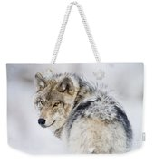 Timber Wolf Pictures 1268 Weekender Tote Bag