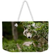 Timber Wolf Pictures 1328 Weekender Tote Bag