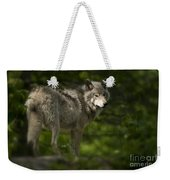 Timber Wolf Pictures 1336 Weekender Tote Bag