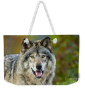 Timber Wolf Pictures 1388 Weekender Tote Bag