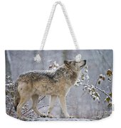 Timber Wolf Pictures 1401 Weekender Tote Bag