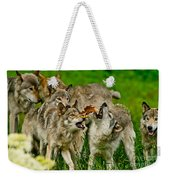 Timber Wolf Pictures 1593 Weekender Tote Bag