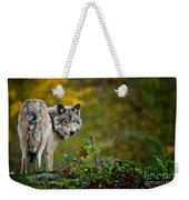 Timber Wolf Pictures 1627 Weekender Tote Bag