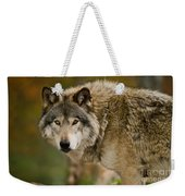 Timber Wolf Pictures 1629 Weekender Tote Bag