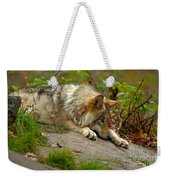 Timber Wolf Pictures 1646 Weekender Tote Bag