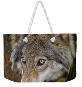 Timber Wolf Pictures 1660 Weekender Tote Bag