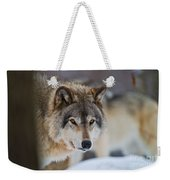 Timber Wolf Pictures 259 Weekender Tote Bag