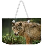 Timber Wolf Pictures 262 Weekender Tote Bag