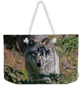 Timber Wolf Pictures 405 Weekender Tote Bag