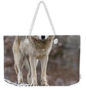 Timber Wolf Pictures 495 Weekender Tote Bag