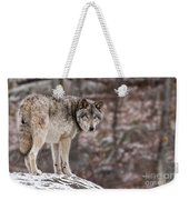Timber Wolf Pictures 498 Weekender Tote Bag