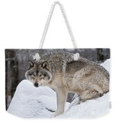 Timber Wolf Pictures 683 Weekender Tote Bag