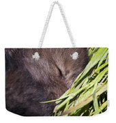 Timber Wolf Pictures 820 Weekender Tote Bag