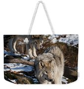 Timber Wolf Pictures 957 Weekender Tote Bag by World Wildlife Photography