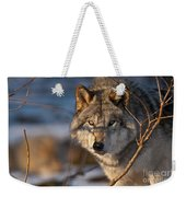 Timber Wolf Pictures 981 Weekender Tote Bag