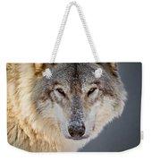 Timber Wolf Seasons Greeting Card 21 Weekender Tote Bag