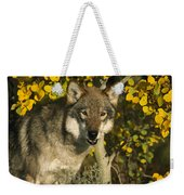 Timber Wolf Teton Valley Idaho Weekender Tote Bag