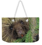 T.kitchin 14107c, Porcupine In Spruce Weekender Tote Bag