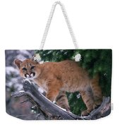 T.kitchin 15274d, Cougar Kitten Weekender Tote Bag