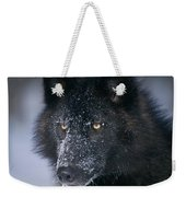 T.kitchin Tk1731e, Gray Wolf, Timber Weekender Tote Bag